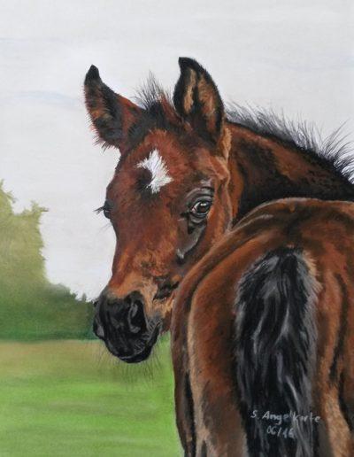 Bilder Stefanie Angelkorte Beau Coeur Pferdeportraits Fohlen Pferdezucht