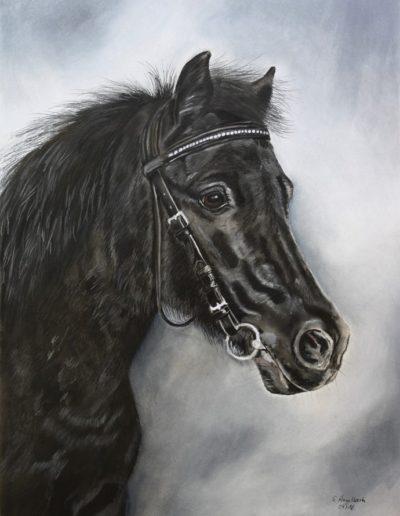 Bilder Stefanie Angelkorte Blacky Pferdeportraits Shetlandpony Pferdemaler