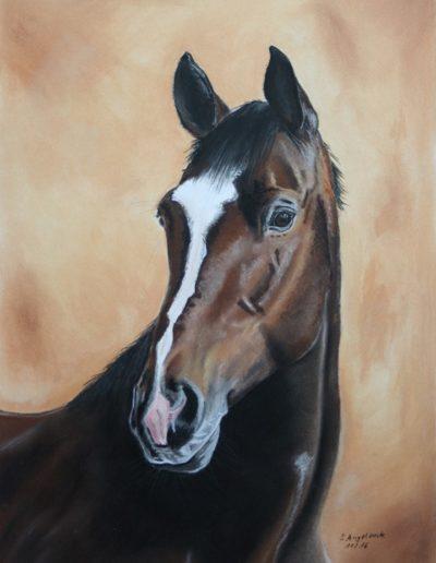 Bilder Stefanie Angelkorte Bliss Pferdeportraits Dressurpferd Pferdemaler