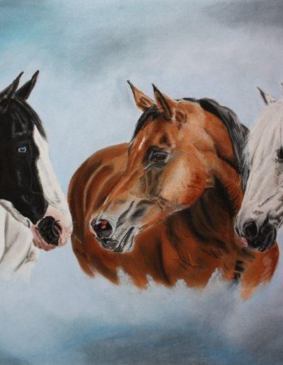 Bilder Stefanie Angelkorte Blue Faya Buffalo Pferdeportraits Collage Tripleportrait