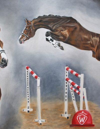 Bilder Stefanie Angelkorte Cahsmere Pferdeportraits Westfalenhengst Prämienhengst Pferdezucht