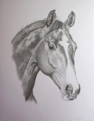 Bilder Stefanie Angelkorte Cheyenne Pferdeportraits Bleistiftportrait Auftragsmalerei