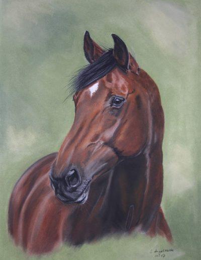 Bilder Stefanie Angelkorte Curly Pferdeportraits Pferdemaler