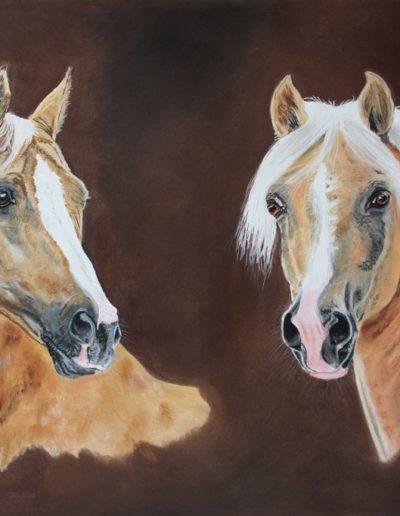 Bilder Stefanie Angelkorte Cyrill Danilo Pferdeportraits Sportponys FEI Ponys Collage
