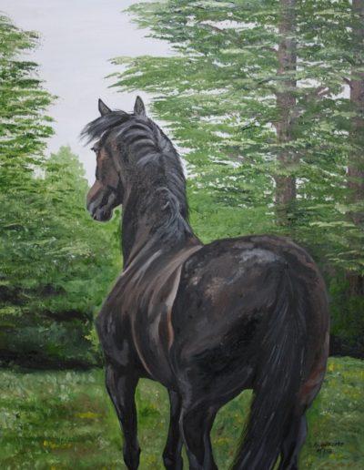 Bilder Stefanie Angelkorte Donnerschwalbe Pferdeportraits Öl auf Leinwand
