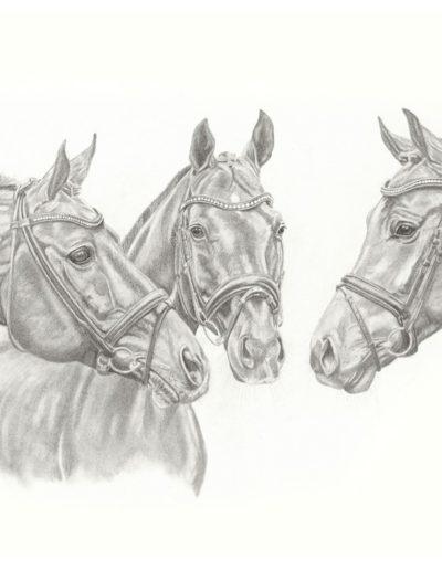 Bilder Stefanie Angelkorte Rock Forever Rockwell Rock Amour Pferdeportraits Bleistiftzeichnung Drei Generationen Hengste Pferdezucht Deckhengste