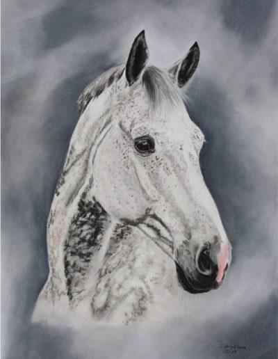 Bilder Stefanie Angelkorte Duevelle Pferdeportraits Pferdemalerin