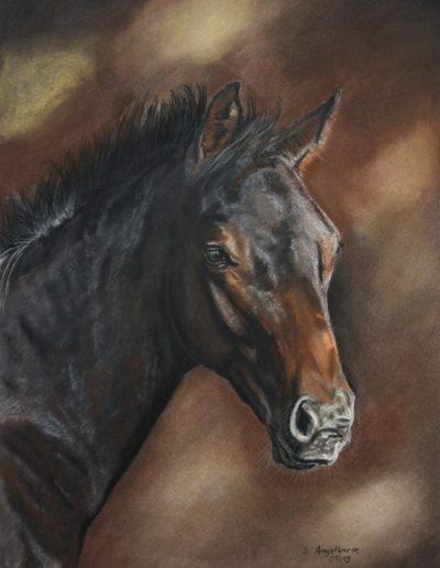 Bilder Stefanie Angelkorte Fayano Pferdeportraits Fohlen Pferdezucht