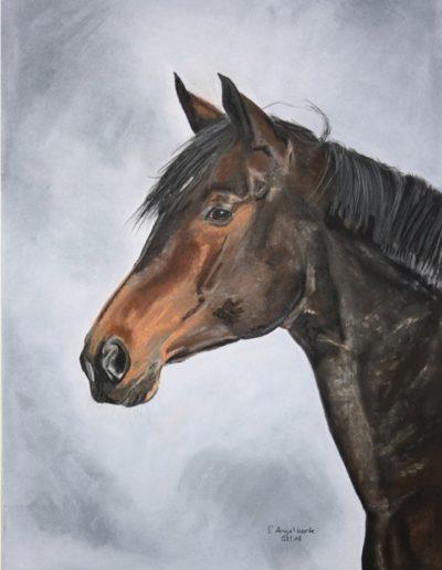 Bilder Stefanie Angelkorte Figo Pferdeportraits Sportpferd Pferdemaler