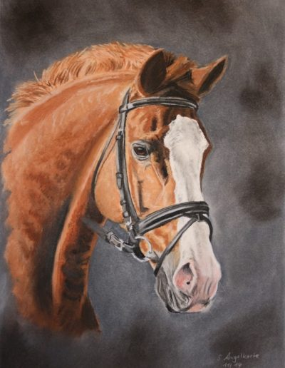 Bilder Stefanie Angelkorte Griffin Pferdeportraits Sportpferd Auftragsmaler