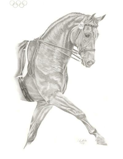 Bilder Stefanie Angelkorte Rembrandt Pferdeportraits Olympiasieger Dressurpferd Romadour II Nicole Uphoff Weltmeister Herbert DeBaey
