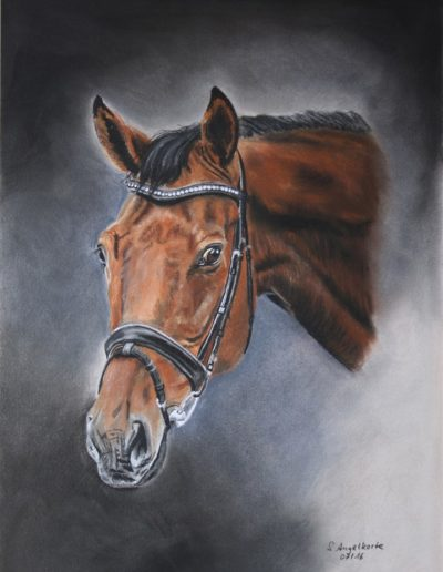 Bilder Stefanie Angelkorte Rockitansky Pferdeportraits Pferdemaler