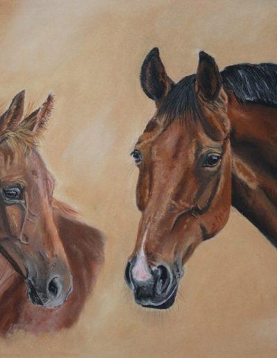Bilder Stefanie Angelkorte Siena Rosa Pferdeportraits Pferdezucht Pferdemalen