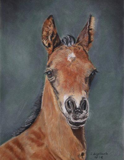 Bilder Stefanie Angelkorte Silver Lining Pferdeportraits Pferdezucht Fohlen