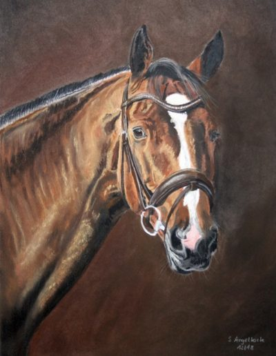 Bilder Stefanie Angelkorte Baciana Fian Pferdeportraits Springpferd Pferdemaler Auftragsmaler