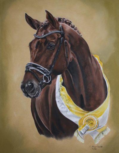 Bilder Stefanie Angelkorte Vivino Pferdeportraits 2Mio Euro Hengst Prämienhengst