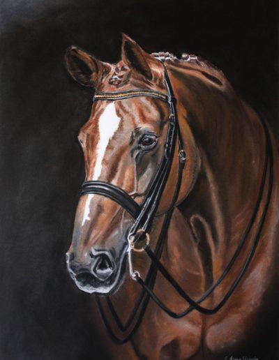 Bilder Stefanie Angelkorte Washington Pferdeportraits Pferdemalen