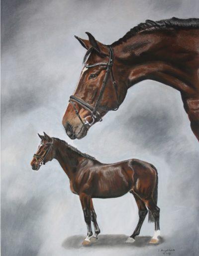 Bilder Stefanie Angelkorte Lawrence von Arabien Pferdeportraits Pferdemalen