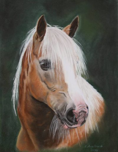 Bilder Stefanie Angelkorte Bea Pferdeportraits Auftragsmalerei Haflinger Pastellkreide