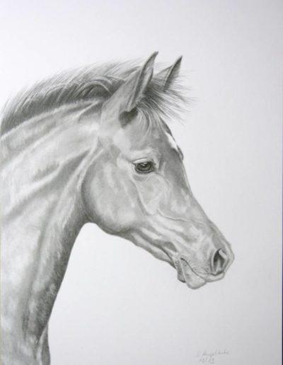 Bilder Stefanie Angelkorte Coco Noir Pferdeportraits Deutsches Reitpony Pferdemale Ponyfohlen