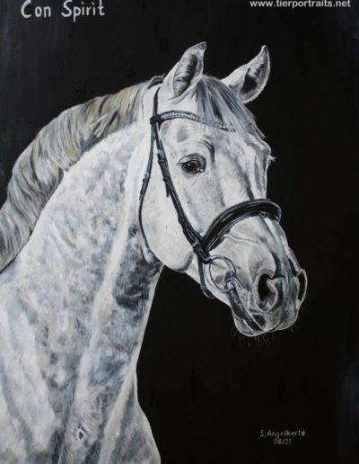 Bilder Stefanie Angelkorte Benicio Pferdeportraits Hengstportrait Springpferd Con Spirit Ölbild Cornet Obolensky