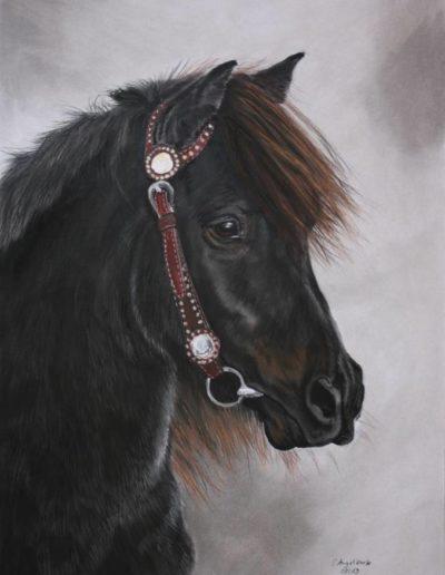 Bilder Stefanie Angelkorte Fury Pferdeportraits Auftragsmalerei Shetty Wallach Shetlandpony
