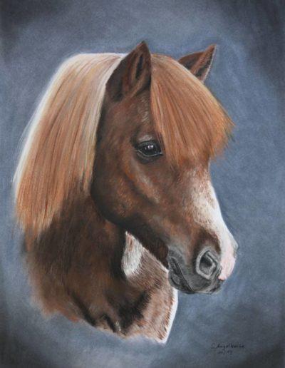 Bilder Stefanie Angelkorte Samson Pferdeportraits Auftragsmalerei Shetty Wallach Shetlandpony