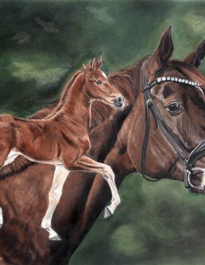 Bilder Stefanie Angelkorte Brentano II Pferdeportraits Auftragsmalerei Sezuans Donnerhall Stute mit Fohlen
