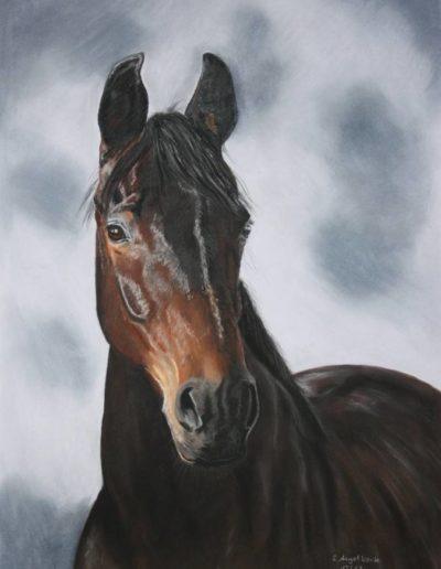 Bilder Stefanie Angelkorte Silencio Pferdeportraits Auftragsmalerei Oldenburger