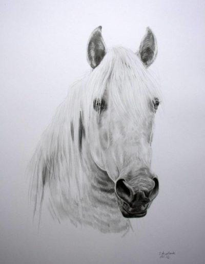 Bilder Stefanie Angelkorte Soraya Pferdeportraits Andalusier Pferdemalen Schimmel