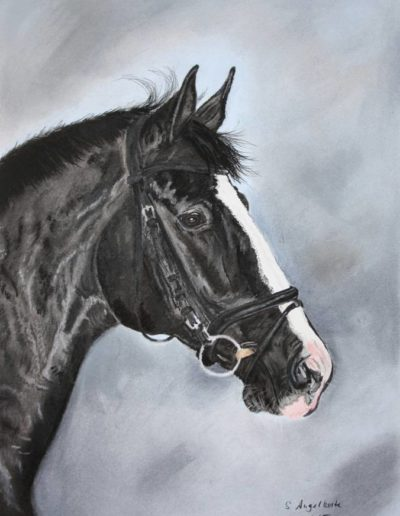 Bilder Stefanie Angelkorte Theoden Pferdeportraits Dressurpferd Pferdemalen Trakehner