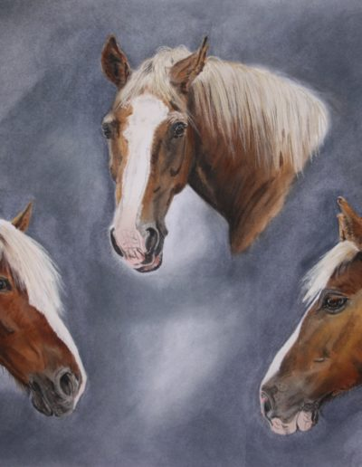 Bilder Stefanie Angelkorte Pferdeportraits Auftragsmalerei Kaltblutpferde Schwarzwälder Fuchs Collage