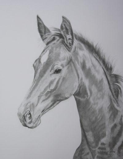 Fohlen Bilder Stefanie Angelkorte Pferdeportraits Bleistift Pferdemalen Bel Esprit