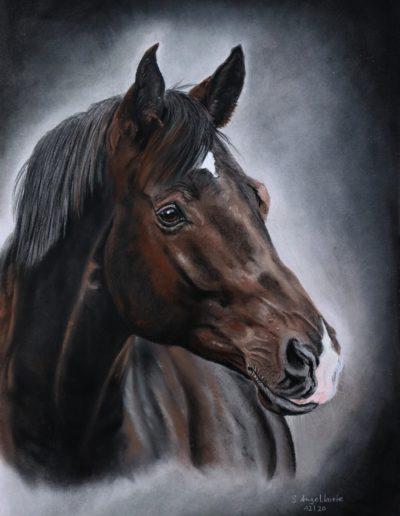Pastellkreide Bilder Stefanie Angelkorte Millenium Pferdeportraits Auftragsmalerei Draclua Trakehner