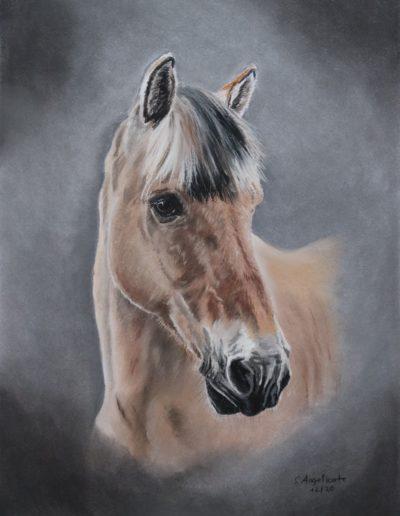 Pastellkreide Bilder Stefanie Angelkorte Kosmo Pferdeportraits Auftragsmalerei Norweger Fjordpferd