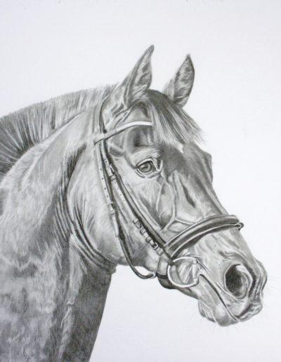 Bilder Stefanie Angelkorte Pferdeportraits Bleistift Lancer Pferdemalen Reitperd